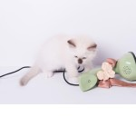 Why cats love accessories? Ragdoll alle prese con scarpe e borse!